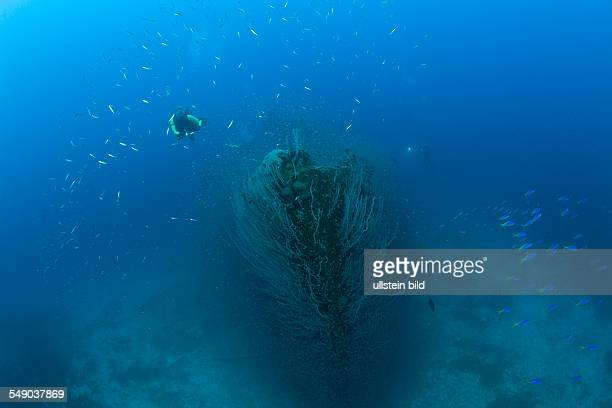 Diver at Bow of Destroyer USS Lamson, Marshall Islands, Bikini Atoll, Micronesia, Pacific Ocean