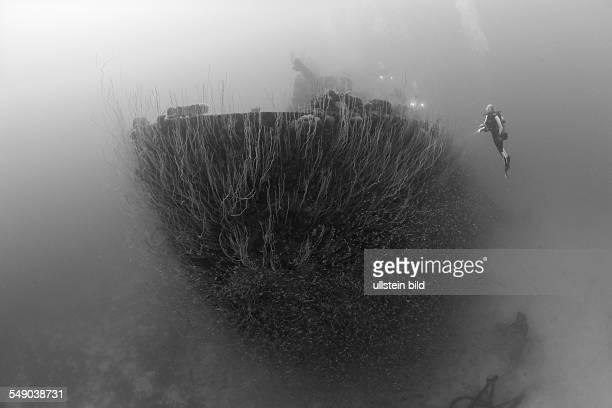 Diver at Stern of USS Carlisle Attack Transporter, Marshall Islands, Bikini Atoll, Micronesia, Pacific Ocean