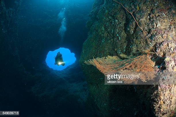 Diver at upper Entrance of Blue Hole Cave, Micronesia, Palau