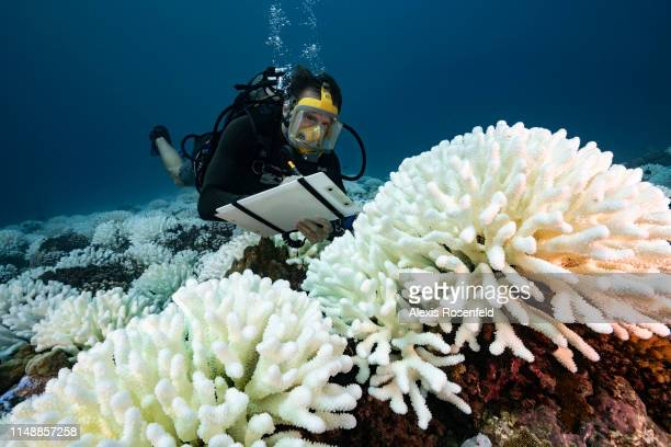 A diver checks the coral reefs of the Society Islands in French Polynesia on May 9 2019 in Moorea French Polynesia Major bleaching is currently...