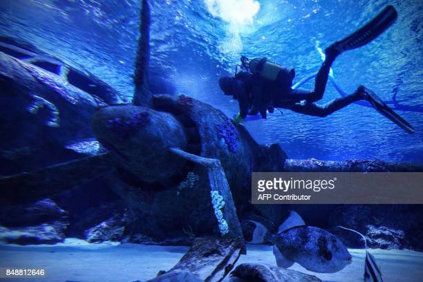Diver cleans a WWII-era plane wreck in a tank at the Antalya Auarium, one of the biggest aquarium complexes in the world, on September 17, 2017 in...