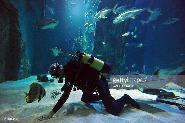 A diver collects shark teeth in the Sea Life Aquarium in central London on October 24 2012 Since the resident sharks increased three fold earlier...