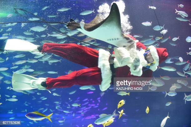 TOPSHOT A diver dressed as a Santa Claus swims with fish at the Sunshine Aquarium in Tokyo on December 5 2016 The aquarium is holding the Christmas...