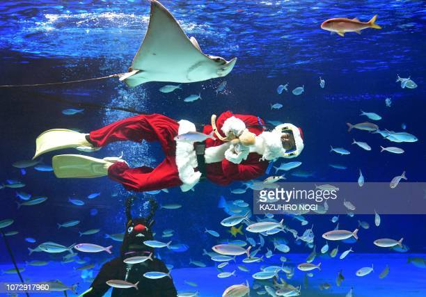 A diver dressed in a Santa Claus costume swims with fish and rays as another dressed as a reindeer looks on at Sunshine Aquarium in Tokyo on December...