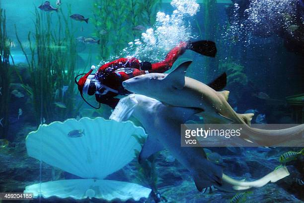 A diver dressed in a Santa Claus costume swims with fish at Qingdao Underwater World on December 24 2013 in Qingdao China