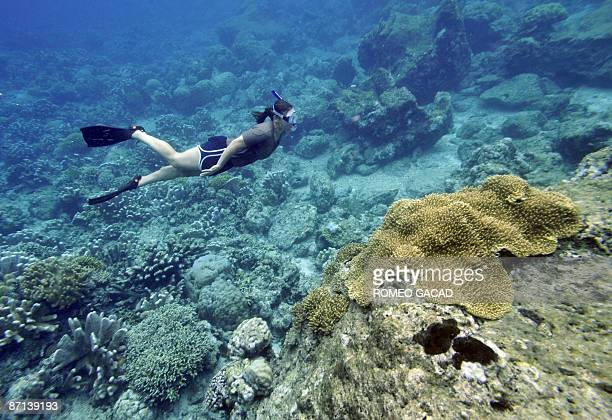 A diver explores the coral reef at the Bunaken Island marine protected national park in Manado on May 13 2009 as the capital city of northern...
