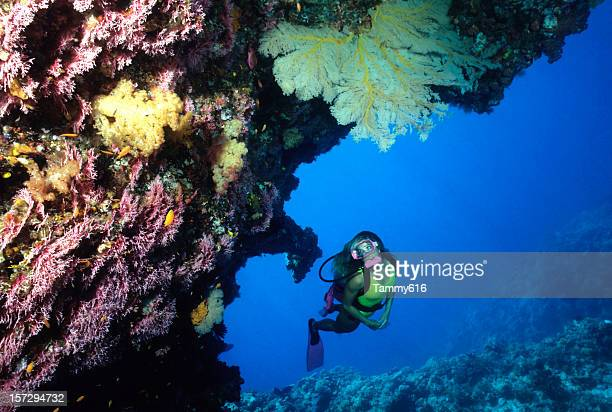 diver exploring coral cave. australia - great barrier reef stock pictures, royalty-free photos & images