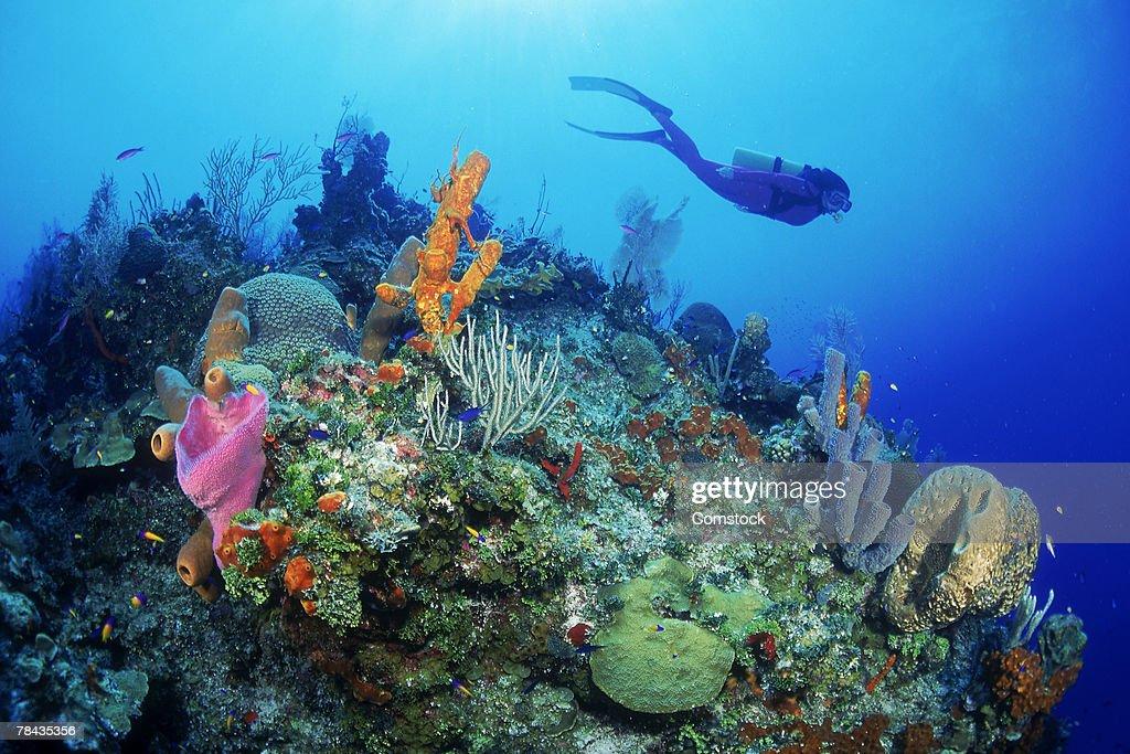 Diver exploring coral reef : Stockfoto