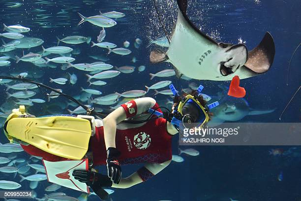 A diver feeds red heartshaped squid meat to a ray at a feeding session ahead of Valentine's Day at the Sunshine Aquarium in Tokyo on February 13 2016...