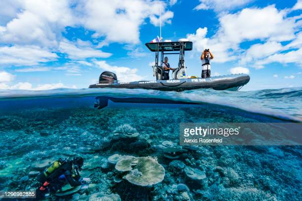 Diver from the Mayotte Marine Natural Park carry out a survey on the reef, called REEFCHECK, on November 27 Mayotte, Comoros archipelago, Indian...