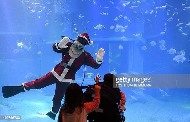 A diver in a Santa Claus costume swims in a large fish tank called 'Pacific Ocean' at the Osaka Aquarium Kaiyukan in Osaka on December 1 2014 The...