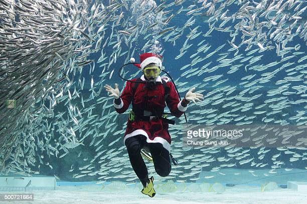 A diver in a Santa Claus costume swims with sardines at the Coex Aquarium on December 10 2015 in Seoul South Korea