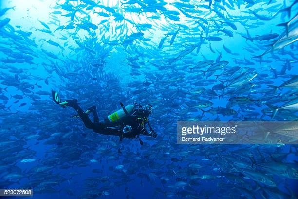 Diver in school of trevallies, Cocos Island National Park, Puntarenas Province, Costa Rica