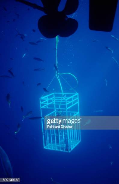 Diver in Shark cages, Mexico, Pacific ocean, Guadalupe