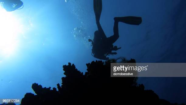 Diver in the Sunlight, Apo Island Philippines