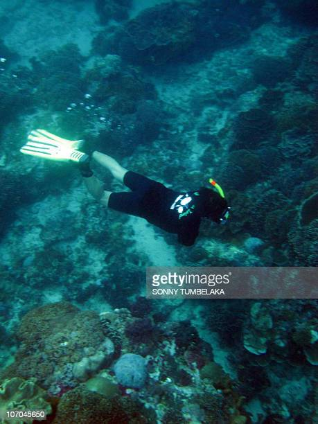 A diver of the nature Conservancy inspect coral at Nusa Penida sea in Klungkung Bali island on November 21 2010 Indonesia on November 21 declared the...
