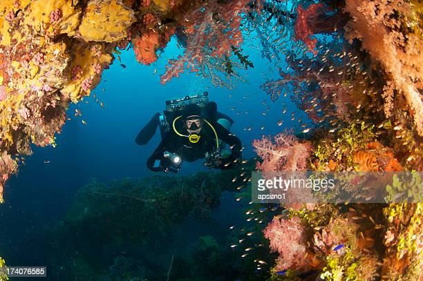 Diver on reef covered wreck