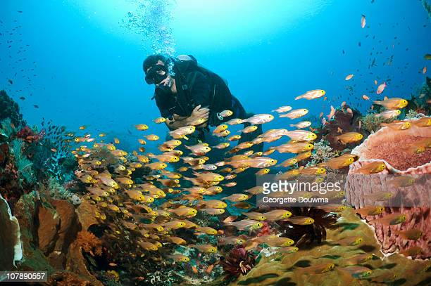 diver over coral reef - east nusa tenggara stock pictures, royalty-free photos & images