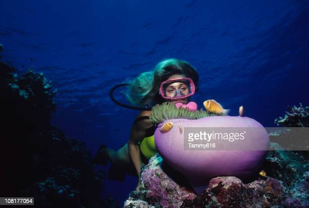 Diver Over Coral Reef With Anemone