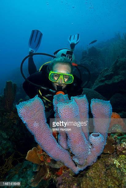 Diver overlooking an azure vase sponge Curacao Netherlands Antilles