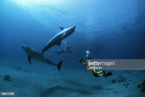 diver photographing dolphins - eilat stock pictures, royalty-free photos & images