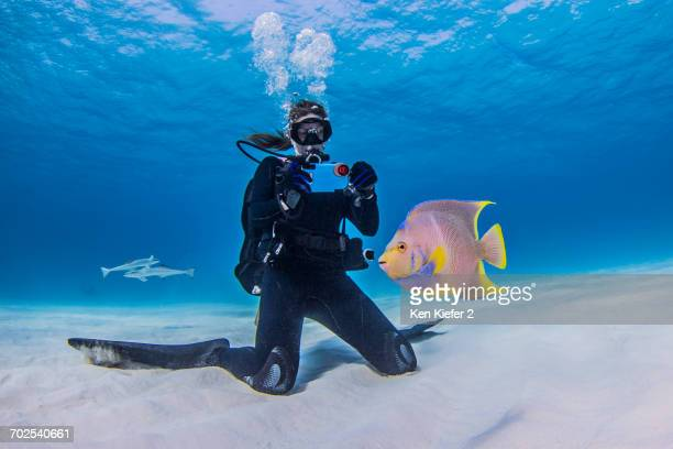 Diver photographing Juvenile Queen Angel fish, underwater view