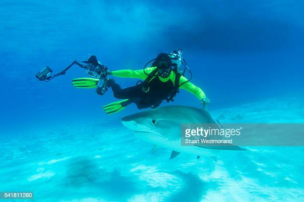 Diver Photographing Tiger Sharks