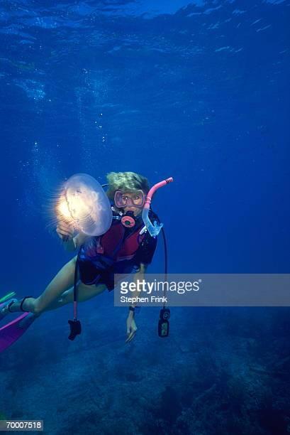 Diver shining light on moon jellyfish (Aurelia aurita), Florida