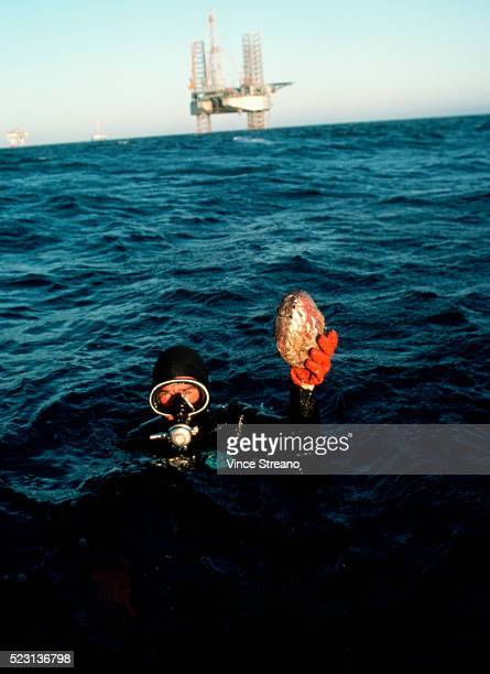 Diver Showing Abalone in Pacific Ocean