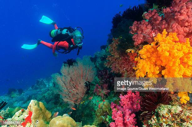 diver swimming in coral reef - reef stock pictures, royalty-free photos & images