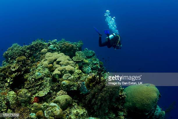 Diver swimming over coral reef pinnacle