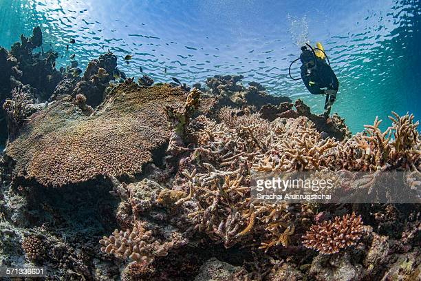 A diver swims in a reef in shallow water