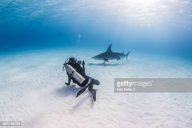 Diver taking photograph of Great Hammerhead Shark