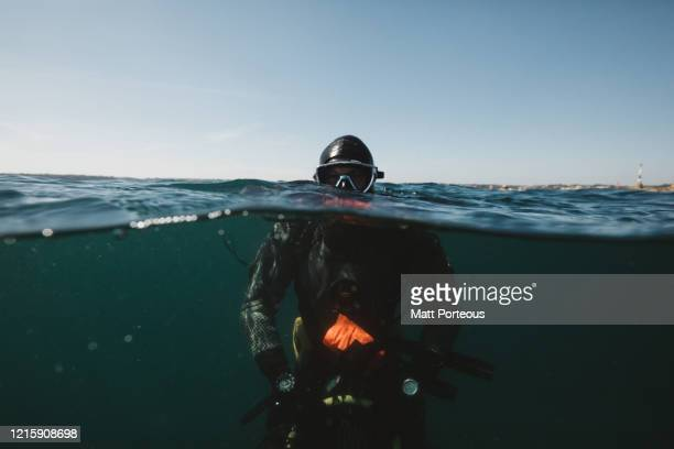 diver underwater - underwater diving stock pictures, royalty-free photos & images