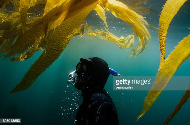 Diver underwater surfacing towards seaweed