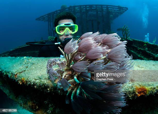 Diver views marine life on wreck.