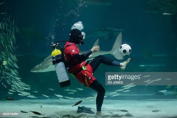 A diver wearing a South Korean football supporter uniform kicks a ball in an aquarium of sardines in Seoul on June 9 2014 South Korea will face...