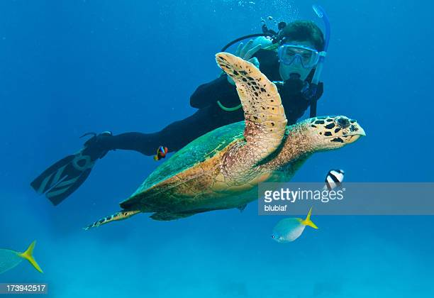 diver w/fish & sea turtle in great barrier reef, australia - great barrier reef stock pictures, royalty-free photos & images