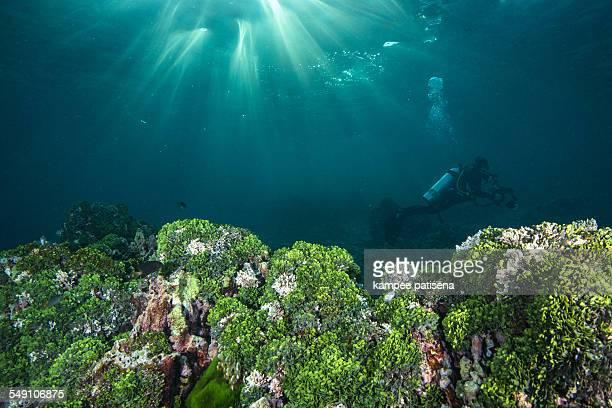Diver with underwater sunbeam