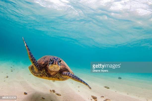 divergence - fundo do mar imagens e fotografias de stock