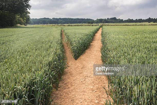 diverging paths in field - chance stock pictures, royalty-free photos & images