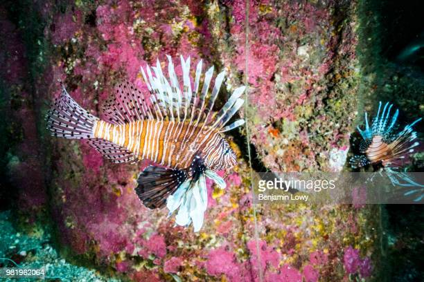 Divers and chefs take part in the 2017 Lionfish World Championship, where they must spear the most lionfish in order to win in Pensacola, FL on May...