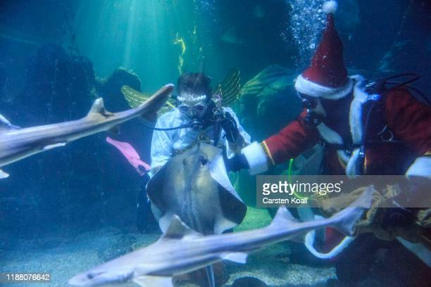 Divers dressed as Santa Claus and an angel feed fish at the Sea Life Berlin aquarium on December 12 2019 in Berlin Germany The aquarium contains over...
