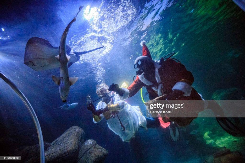 Santa Feeds Fish At Sea Life Berlin : News Photo