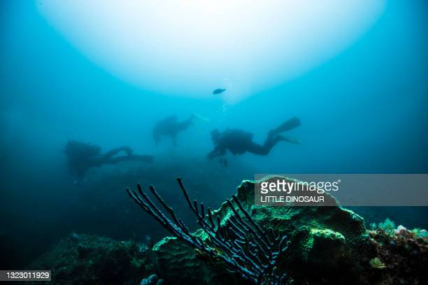 divers exploring the dim blue water. owase, mie japan - diving into water stock pictures, royalty-free photos & images