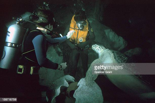 SCUBA divers feed sea turtle at New England Aquarium Boston Massachusetts 1978