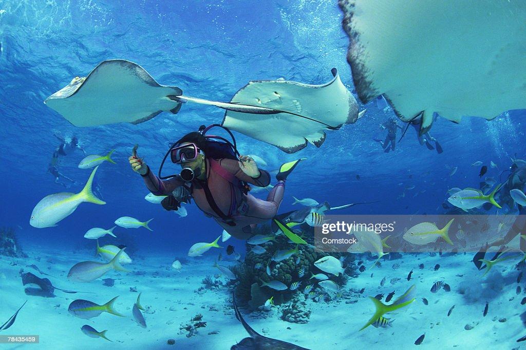 Divers feeding fish and stingrays : Stockfoto