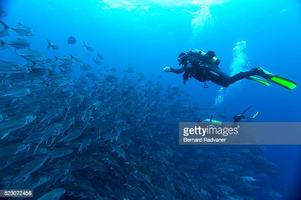 Divers filming school of trevallies, Cocos Island National Park, Puntarenas Province, Costa Rica