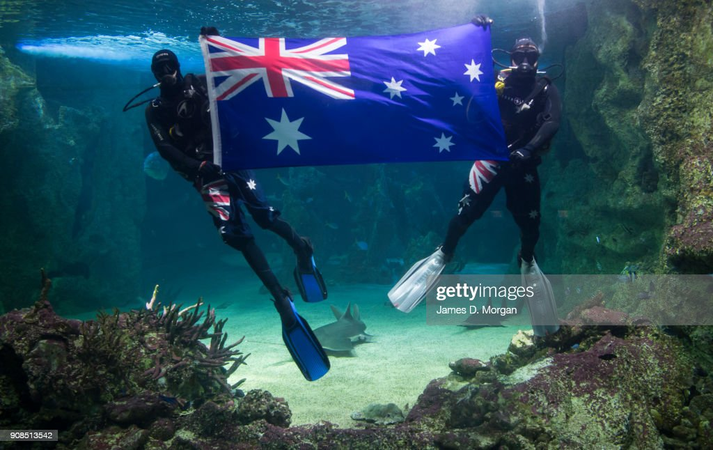 Sea Life Aquarium Divers Hold Underwater Party To Celebrate Australia Day
