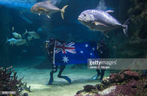 Divers from Sea Life Sydney Aquarium hold an Australian flag underwater as they enjoy an underwater party on January 22 2018 in Sydney Australia...